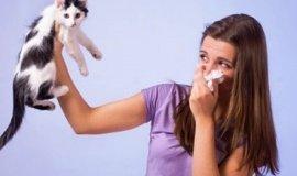 Аллергия на кошачью шерсть. Что делать владельцам кошек?