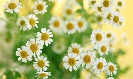 Лечебные травы: мифы и реальность